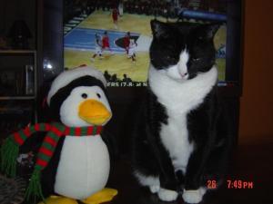 gabby-penguin