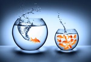 Fish-Outta-School